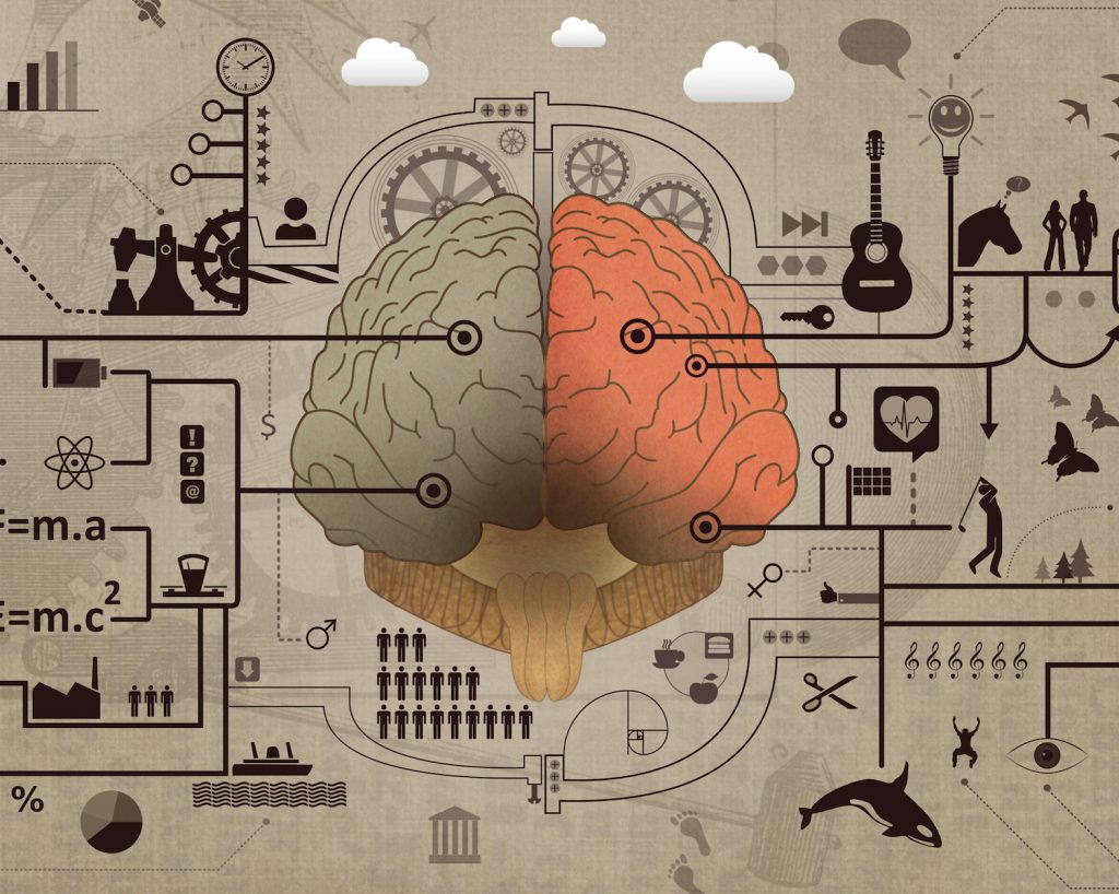 psychology - brain image